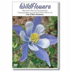 Wildflowers Relaxation DVD